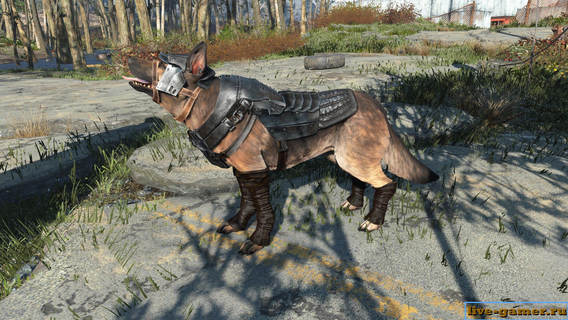 Fallout 4 броня для собаки - как ее надеть
